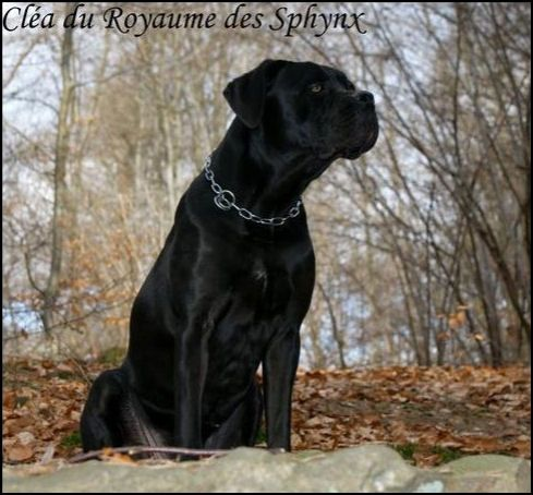 http://eyka.cowblog.fr/images/Divers/clea.jpg