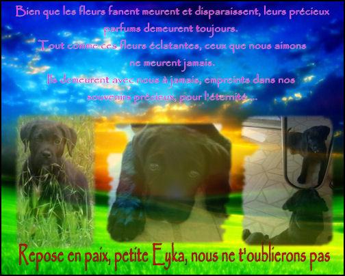 http://eyka.cowblog.fr/images/Eykadossierjuin09/retouchetaillebis.jpg